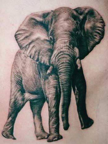 Elephant footprints tattoo - photo#20