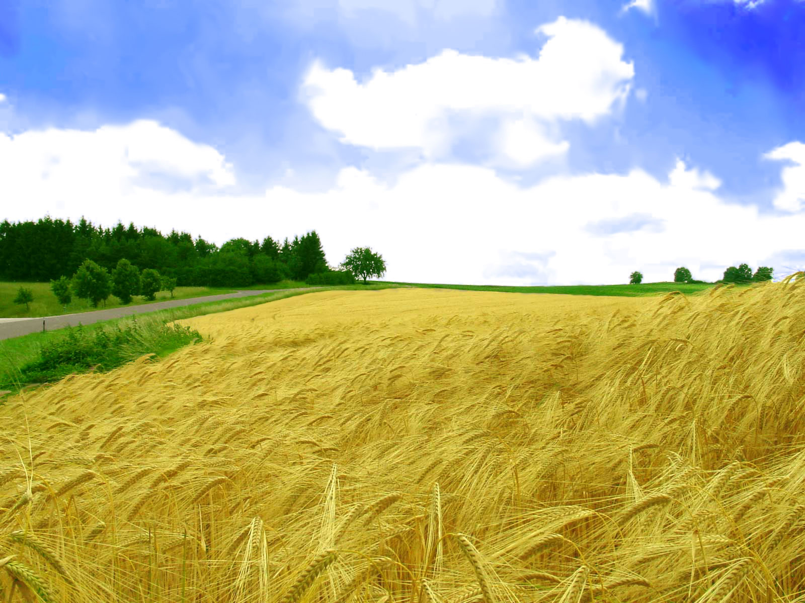 http://1.bp.blogspot.com/_bQ0SqifjNcg/THYA5Oa84dI/AAAAAAAAbp8/Uk4OW53So9o/s1600/golden-field-wallpaper.jpg