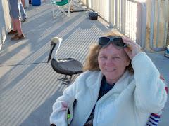 Cedar Key Pelican