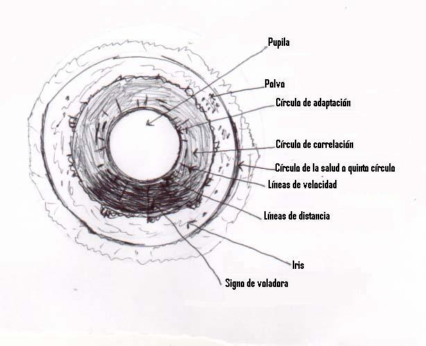 Muestra del ojo