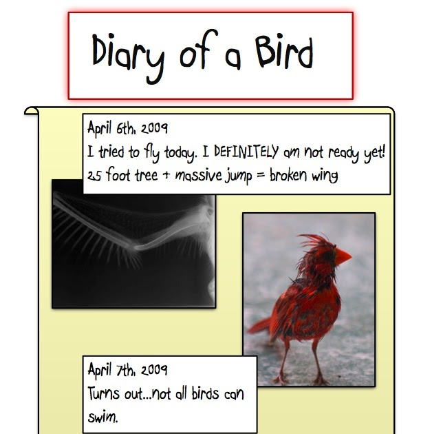Diary Of A Worm: Literature Blog: Diary Of A Worm By: Doreen Cronin