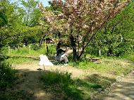 Painting in Kyoto Botanical Gardens