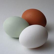 Araucanas Lay Blue Eggs