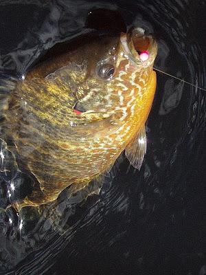sunfish+online.jpg