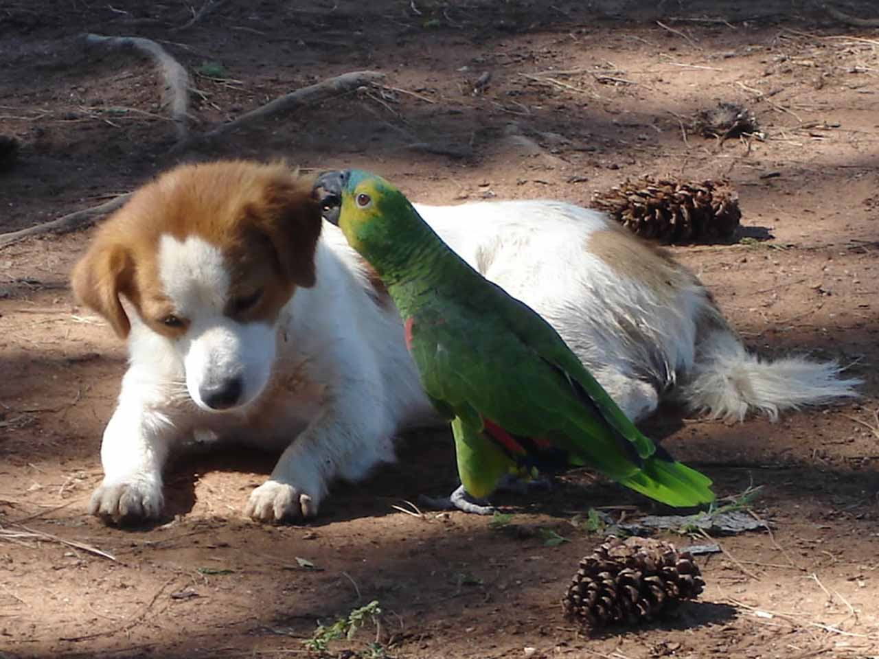 http://1.bp.blogspot.com/_bVhW0zm2jzo/SwbDrsWa7yI/AAAAAAAABOU/xEQ4yMqGhfg/s1600/cao-e-papagaio.jpg