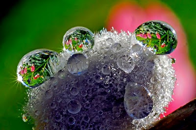 Water Drop Photo Shots