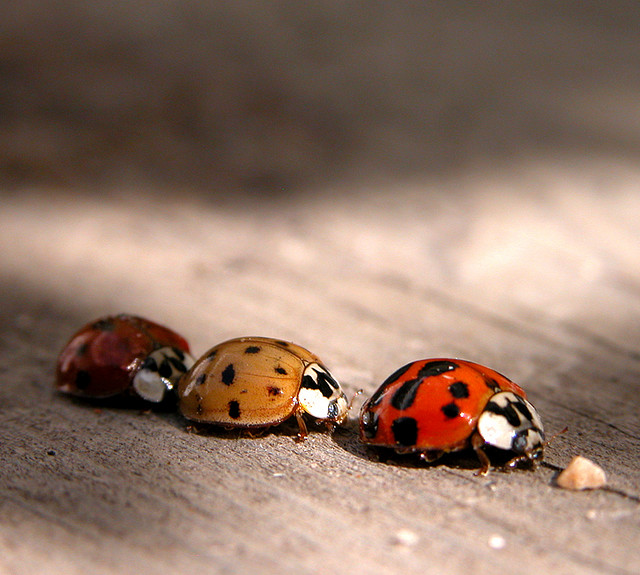 Ladybird Traffic Jam