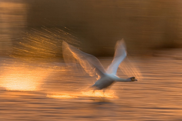 Flight by Steve Garrington