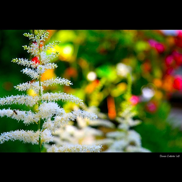 Noël au jardin...