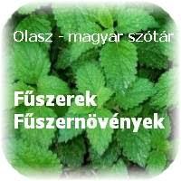 Olasz magyar fűszer szótár