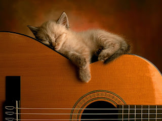 Cute Cats Pictures: Cats - sleeping on top of the guitar