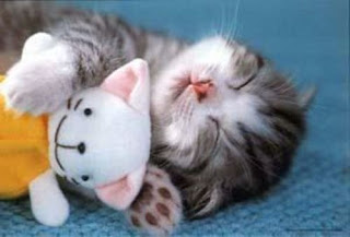 Cute Cats Pictures: Cats - Stripes sleeping