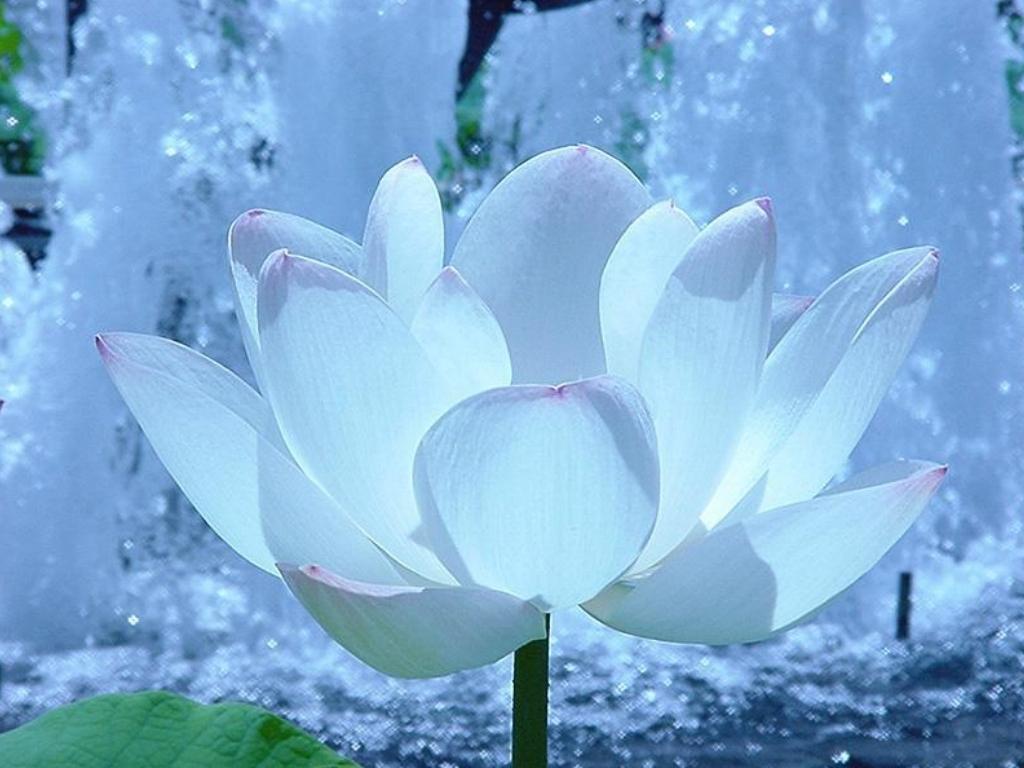 http://1.bp.blogspot.com/_bX78n3-E_AQ/TT3HLcmVqJI/AAAAAAAAAR8/puhzLNlhsl4/s1600/fond-ecran-fleur-blanche.jpg