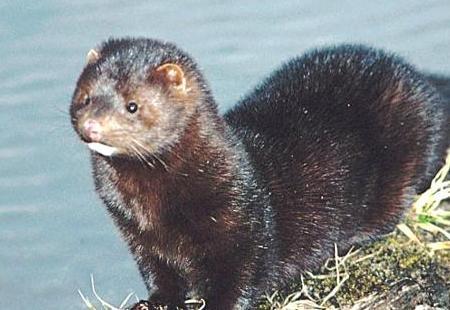 Especies invasoras (alguna argentina)
