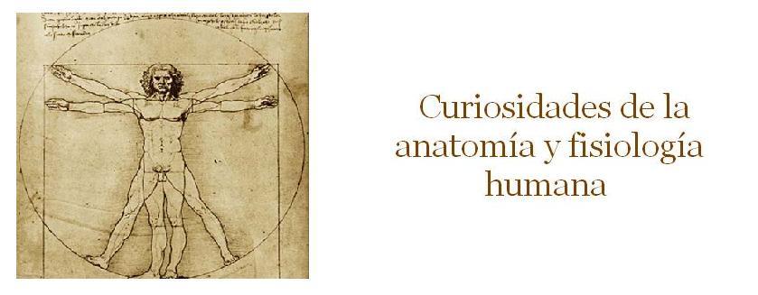 Cursiosidades de la anatomía y fisiología humana: Artritis