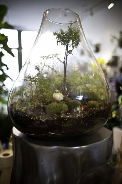 What S Up Trouvaillesdujour The Art And Craft Of Terrariums