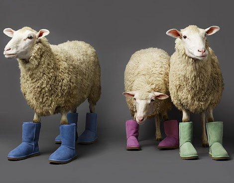 Merciful Hearts Farm: Silly Sheep
