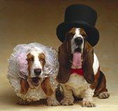 Um lindo casal...