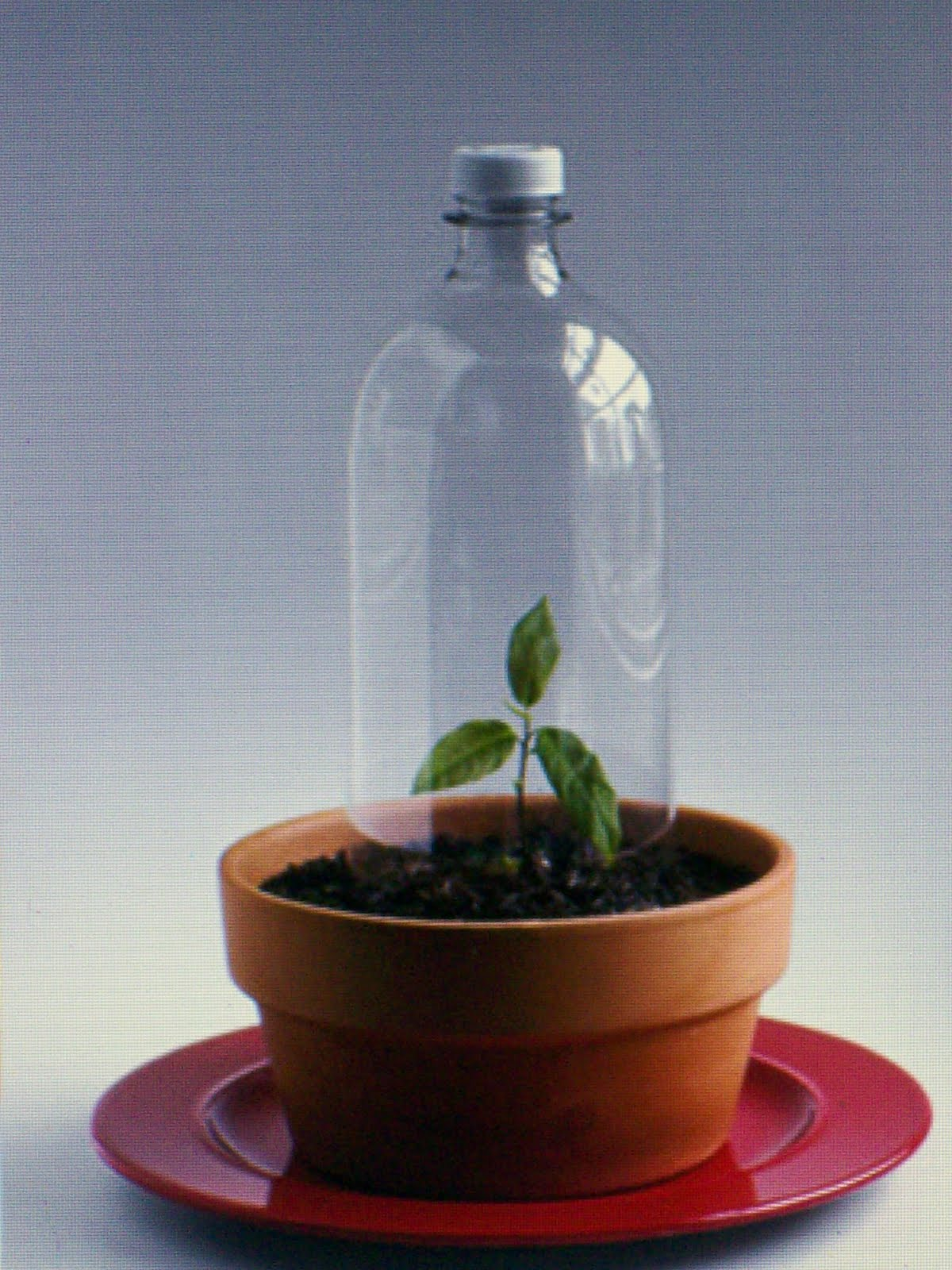 make a thematic soda bottle terrarium with kids the