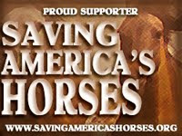 Saving Americas Horses