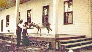 Paul Ford, and Mr. Moore? feeding deer at Birch Lodge