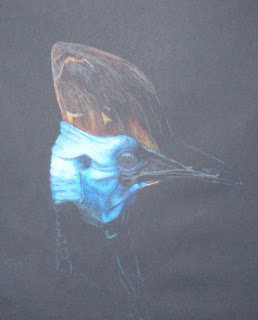 Cassowary WIP by Jennifer Phillip