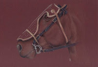 coloured pencil drawing of a horse Dark Knight Copyright Jennifer Rose Phillip