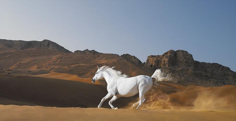 http://1.bp.blogspot.com/_bfnvnlgFusE/TR52kENJkMI/AAAAAAAAAK4/Te1x4oykaok/s1600/Cavallo+bianco2.jpg