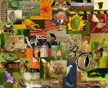 Exposição Vagos Biodiverso