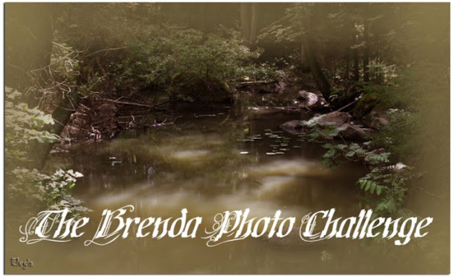 The Brenda Photo Challenge Blog