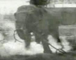 edison electrocute elephant