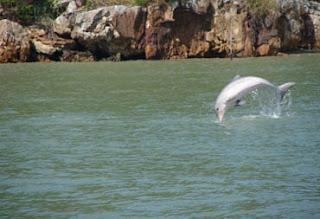 Golfinhos em morro de sao paulo