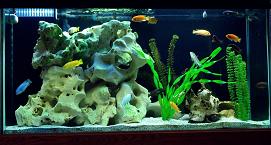 Filtros para el acuario, filtro acuario, acuario filtro biologico, material filtro acuario, construir acuario, filtro en acuario, el filtro acuario, acuario agua dulce filtro