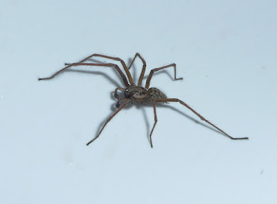 Finding Life Hard How Long Can Spiders Survive Without Food