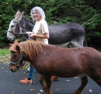 donkey and miniature horse walk together