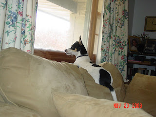 Speedy on the lookout for squirrels