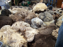 Look at all that beautiful wool !!