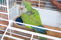 """Missie's newest pet - """"Q"""" is his name, given to Missie by friends"""