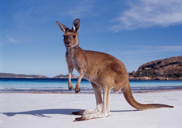Australian Open 2014 (Draw, Predictions etc...) Western-australia-kangaroo-beach