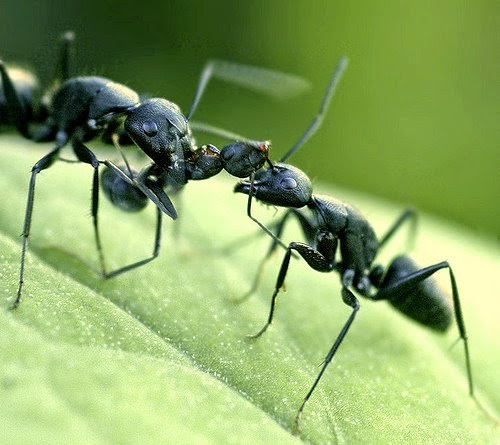 how to get rid of ants in my house naturally