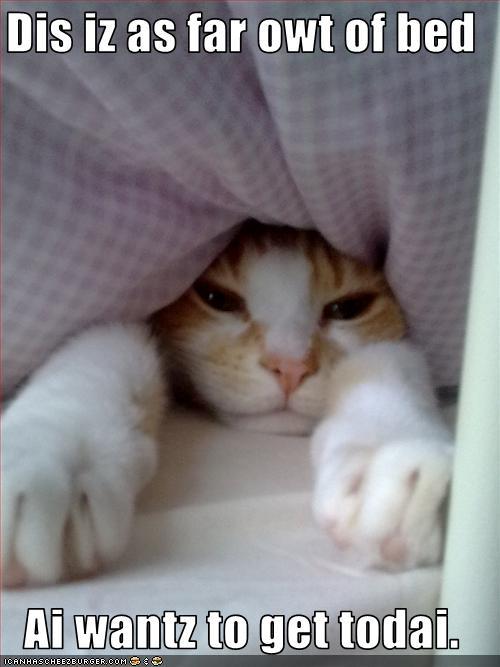 cute kitten meme miss you