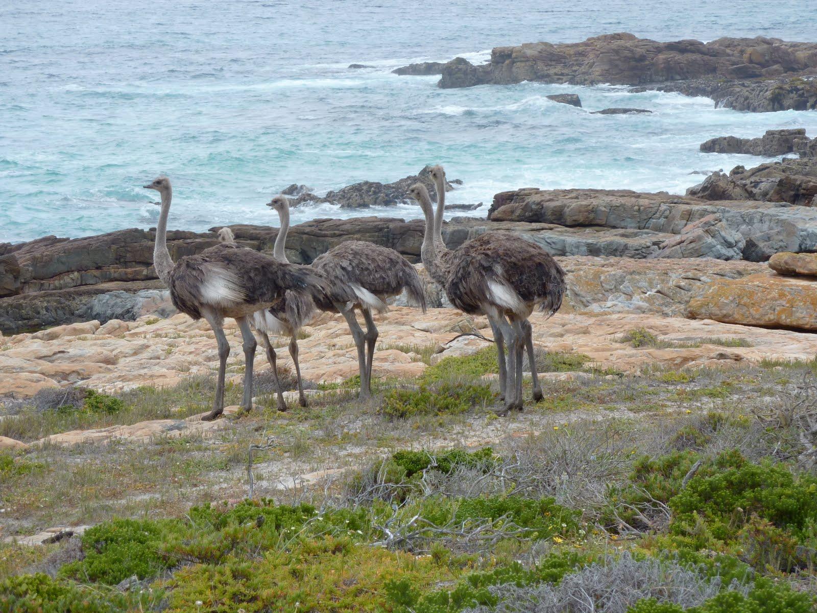 Reise-Blogger: Reisebericht Südafrika: Kap der Guten Hoffnung