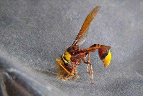 proses terbentuknya sarang lebah