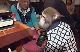 Manic Monkey Waiters in Japan