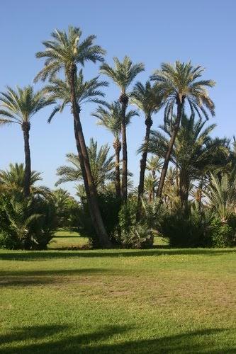 Hotel Maroc  H U00f4tel Coralia Club Marrakech Palmariva