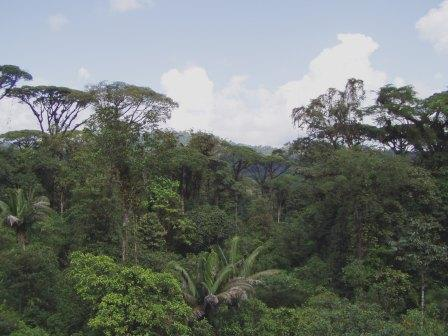 layers of rainforest. +layer+of+the+rainforest