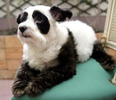 Good Smart Beagle Adorable Dog - pd  Best Photo Reference_925716  .jpg