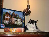 Viaţa e un puzzle cu pisici
