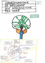 Anatomia del Cervello Lacerta