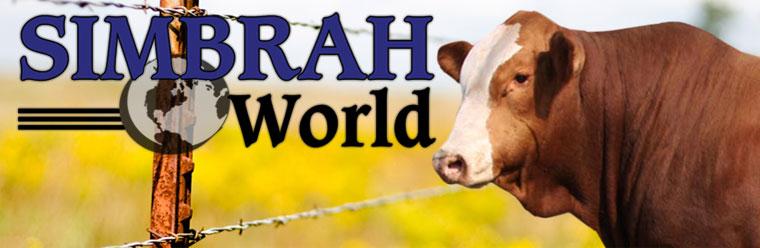 Simbrah World Blog